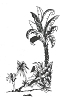 Hawaiian-Tropical Designs - Palm Tree Scene #1 with Trees - Crystal Engraving Design