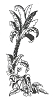 Hawaiian-Tropical Designs - Palm Tree Scene #2 with Bushes - Crystal Engraving Design