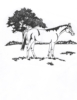 Western-Rodeo Designs - Horse Meadow - Crystal Engraving Design