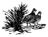 North American Wildlife Designs - Northern Bobwhite Quail - Crystal Engraving Design