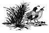 North American Wildlife Designs - Gambel's Quail - Crystal Engraving Design