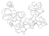 Limited-Edition Designs - Floral - Crystal Engraving Design