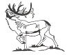 North American Wildlife Designs - Elk - Crystal Engraving Design