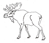 North American Wildlife Designs - Moose - Crystal Engraving Design