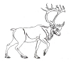 North American Wildlife Designs - Caribou - Crystal Engraving Design
