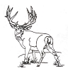 North American Wildlife Designs - Mule Deer - Crystal Engraving Design