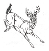 North American Wildlife Designs - Whitetail Deer - Crystal Engraving Design