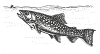 North American Wildlife Designs - Rainbow Trout - Crystal Engraving Design