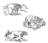 North American Wildlife Designs - Bears (assorted) - Crystal Engraving Design