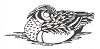 North American Wildlife Designs - Wood Duck - Crystal Engraving Design