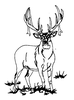 North American Wildlife Designs - New Whitetail - Crystal Engraving Design