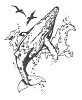 Seascape-Nautical Designs - Whale - Crystal Engraving Design