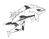 Seascape-Nautical Designs - Orca Whale - Crystal Engraving Design