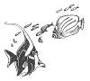 Seascape-Nautical Designs - Angel Fish - Crystal Engraving Design