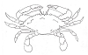 Seascape-Nautical Designs - Blue Crab - Crystal Engraving Design