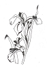 Traditional-Floral Designs - Irises - Crystal Engraving Design