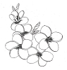 Traditional-Floral Designs - Plumeria - Crystal Engraving Design