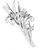 Traditional-Floral Designs - Large Irises - Crystal Engraving Design