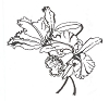 Traditional-Floral Designs - Orchids - Crystal Engraving Design
