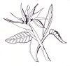Traditional-Floral Designs - Bird of Paradise (new) - Crystal Engraving Design