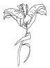 Traditional-Floral Designs - Tiger Lily - Crystal Engraving Design