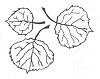 Foliage Designs - aspen Leaves - Crystal Engraving Design