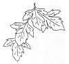 Foliage Designs - Leaf - Crystal Engraving Design