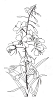 Traditional-Floral Designs - Alaska Fireweed - Crystal Engraving Design